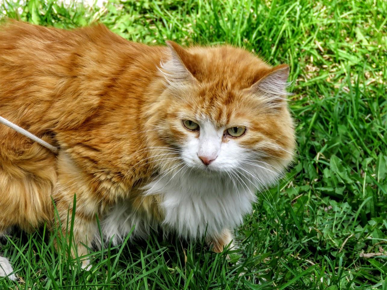 Фотоохота на чёрных коршунов. Рыжие котики и мороженое Сибирские голубые ели) IMG 9916