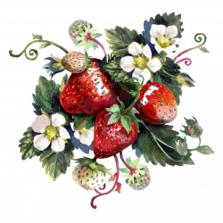 strawberrie.th.png
