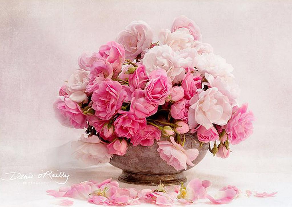 Shades-of-Pink.jpg