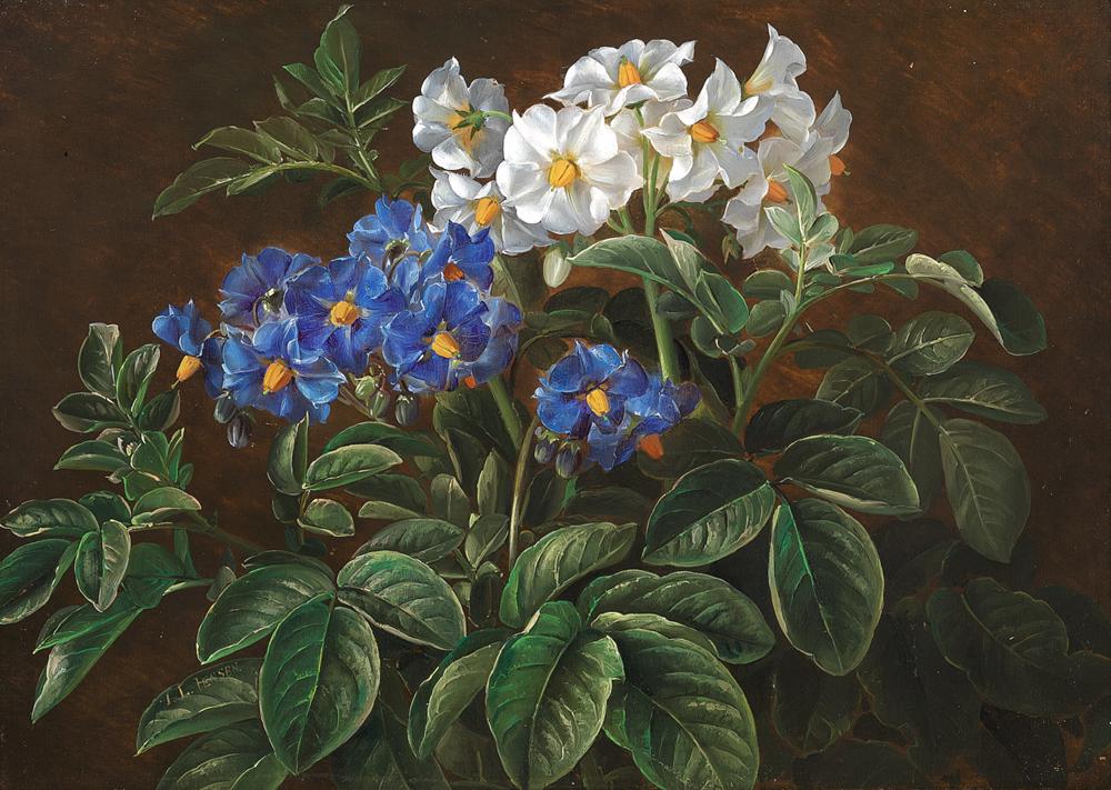 1280px-Johan_Laurentz_Jensen_-_Hvide_og_bla_blomster.png