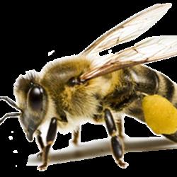Honey_040_Bees---KOPIY-6.th.png