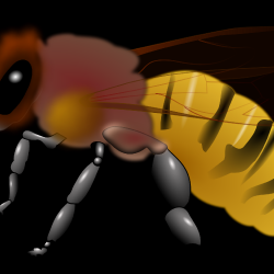 honeybee-clipart-image-from-our-bee-category-check--308301.th.png