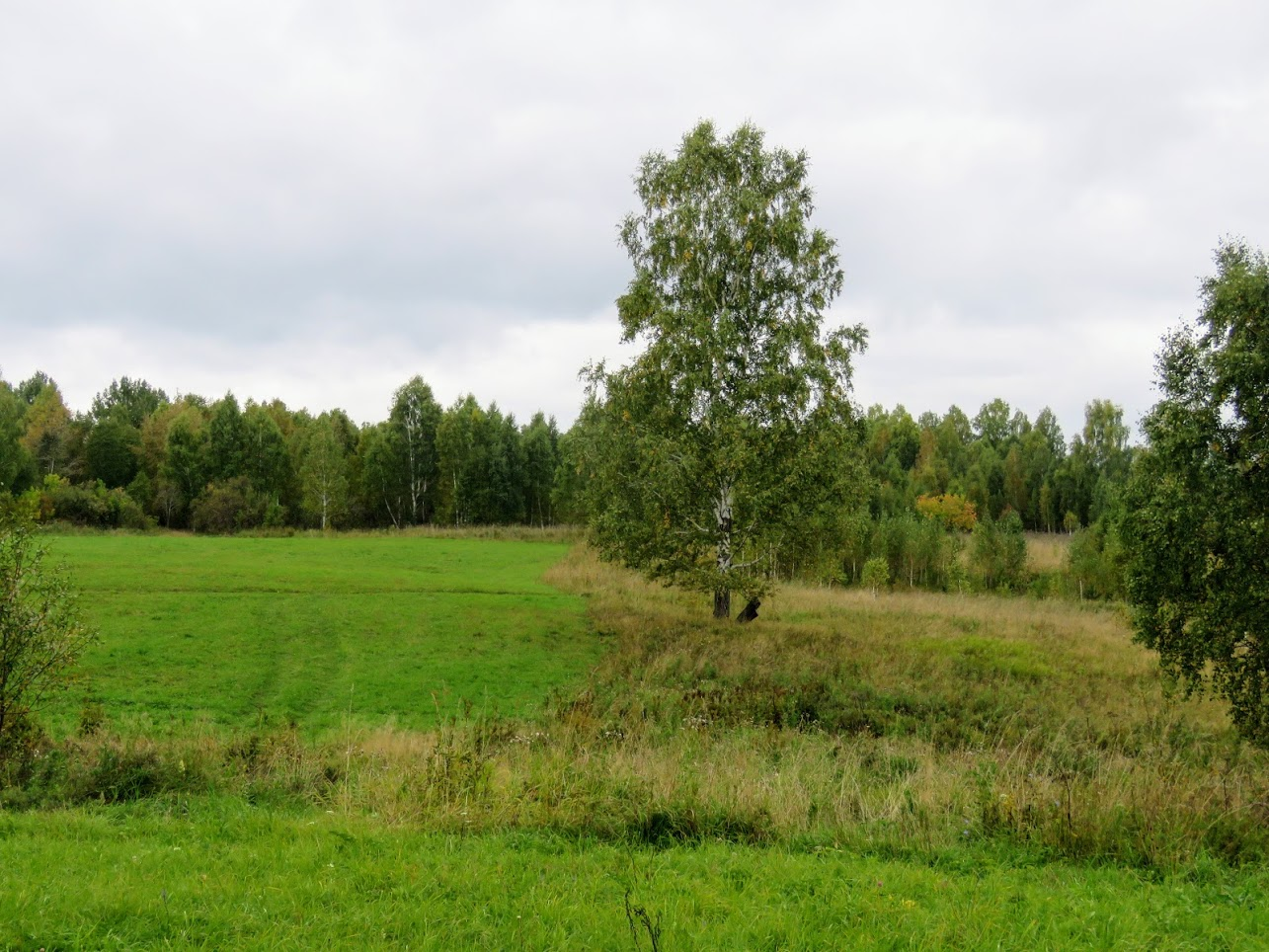 IMG 2549