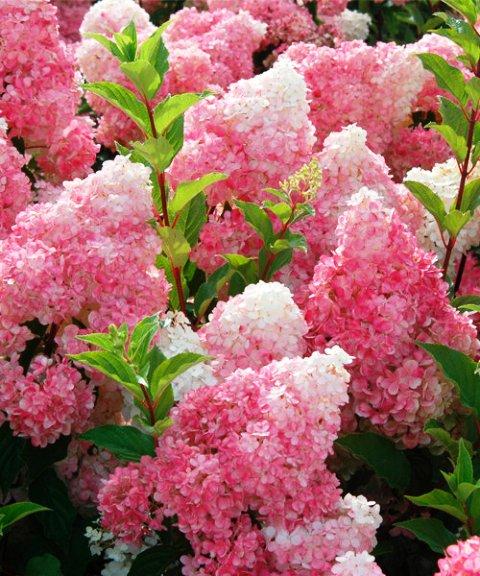 Садо-цвето-огород