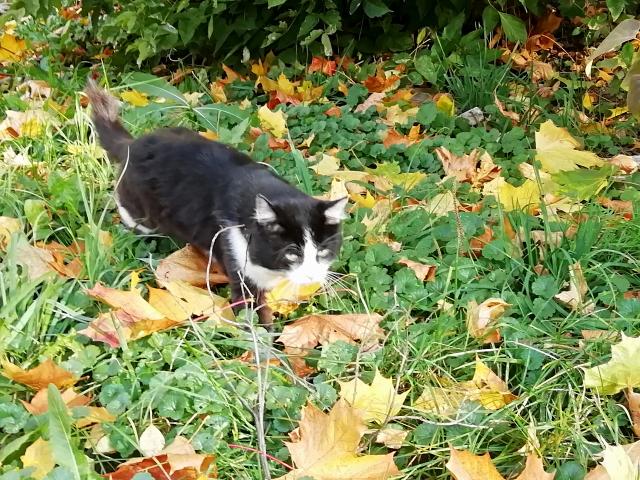 Котичка OK11.md.png