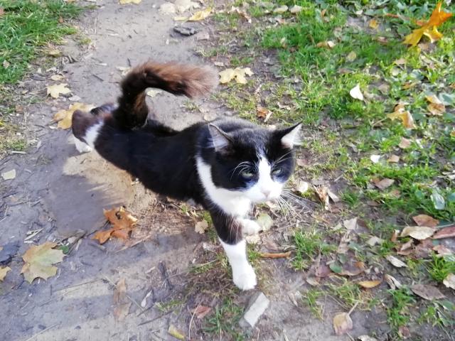 Котичка OK12.md.png