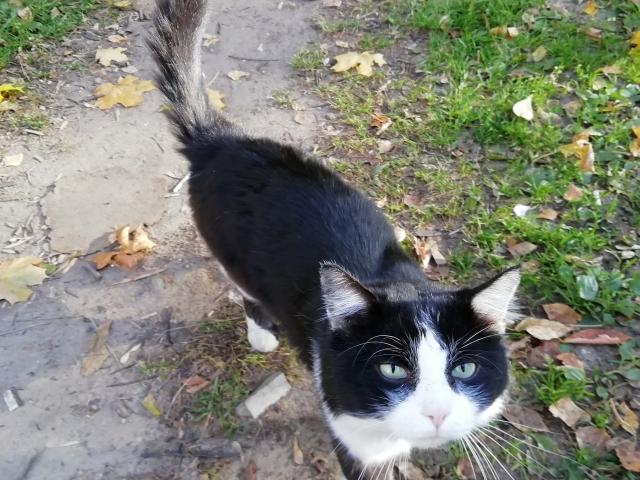 Котичка OK14.md.png