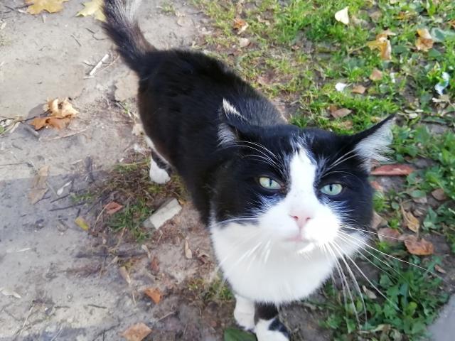 Котичка OK15.md.png