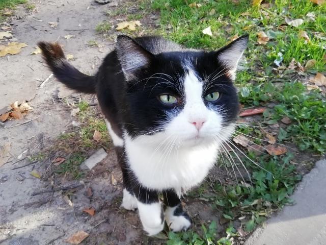 Котичка OK16.md.png