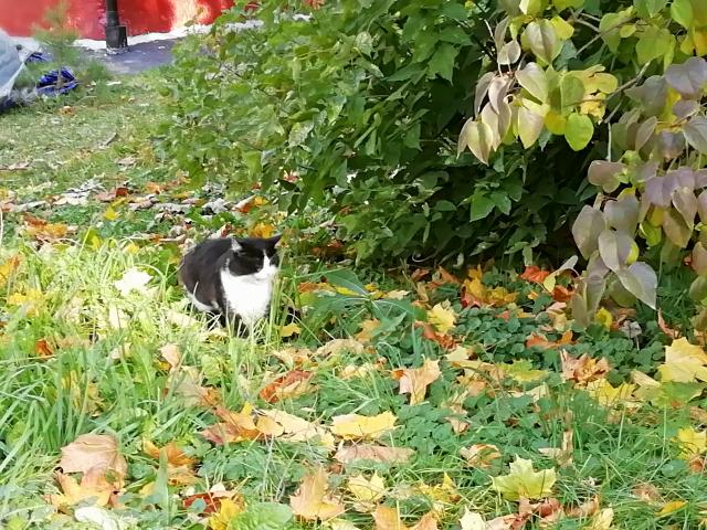 Котичка OK17.md.png