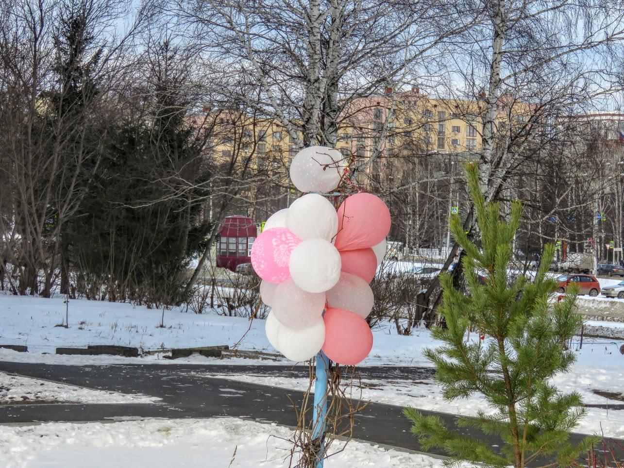 Розовый снежноягодник, снегири и другие прелести дня. Мой Мурыч с утра) IMG 2600
