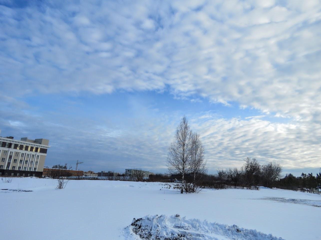 Розовый снежноягодник, снегири и другие прелести дня. Мой Мурыч с утра) IMG 2676