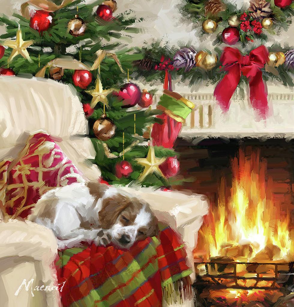 0253-sleeping-dog-the-macneil-studio.jpg