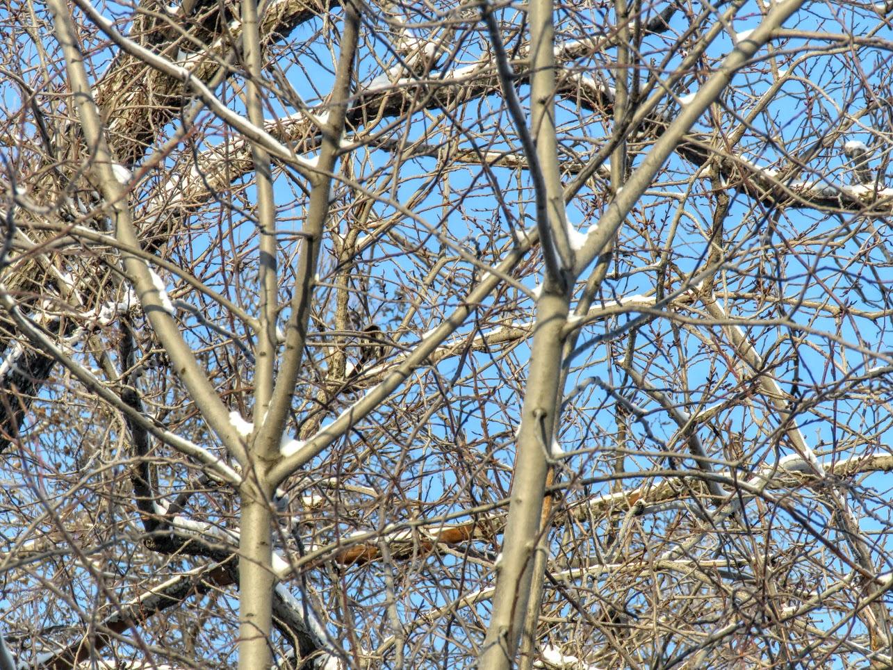 Птички - невелички - ополовники и большой пёстрый дятел IMG 9659