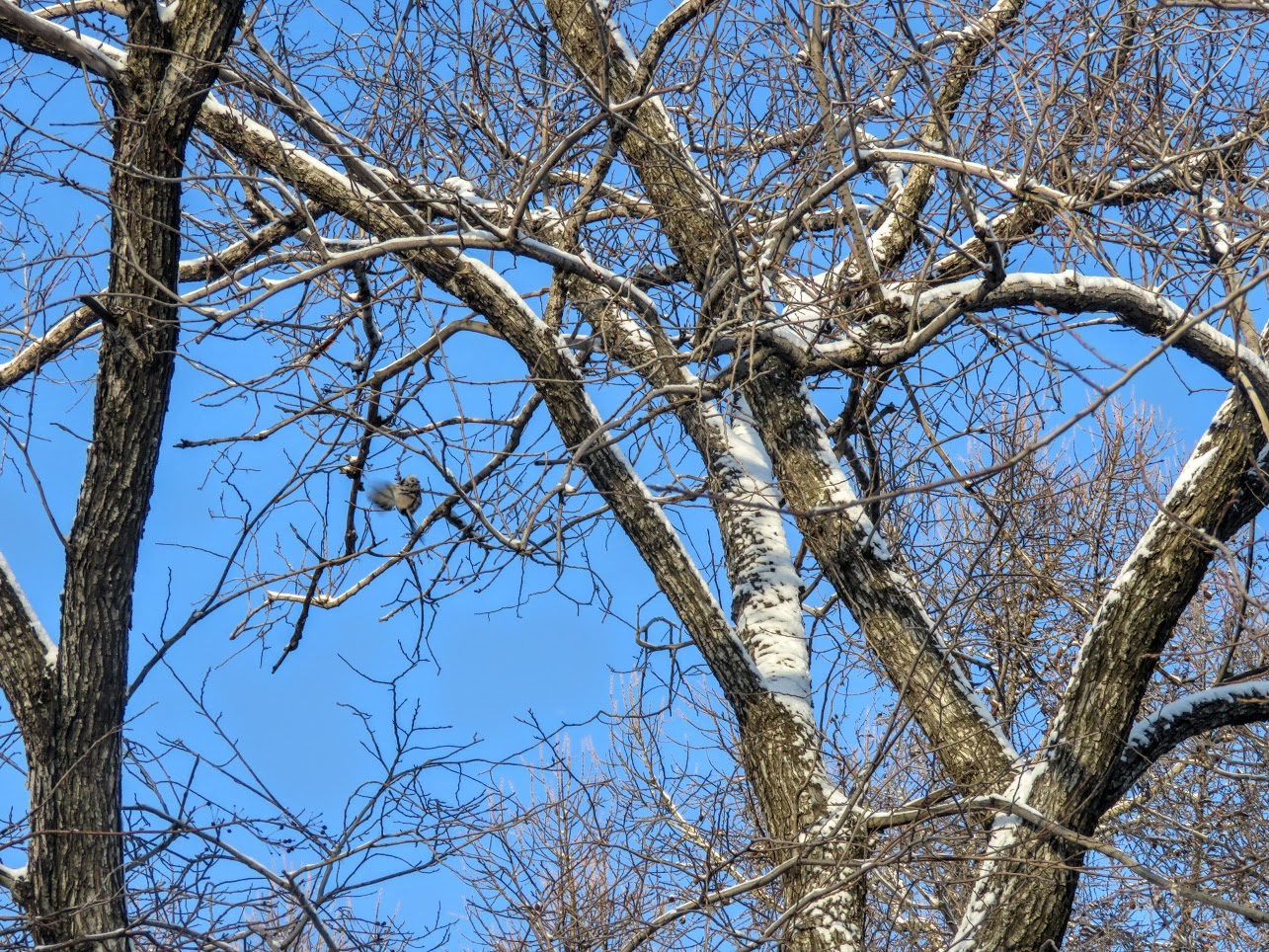 Птички - невелички - ополовники и большой пёстрый дятел IMG 9661