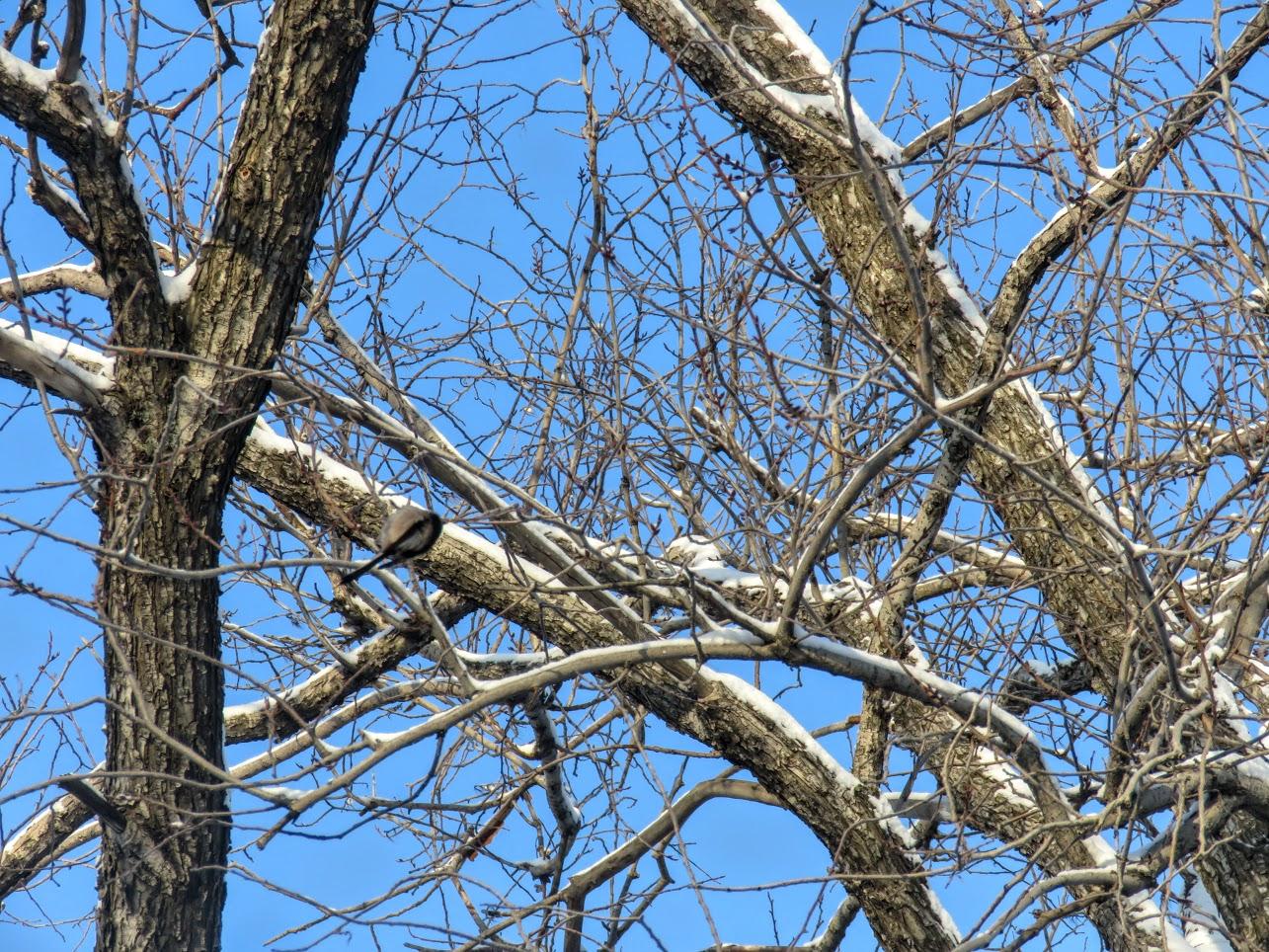 Птички - невелички - ополовники и большой пёстрый дятел IMG 9662