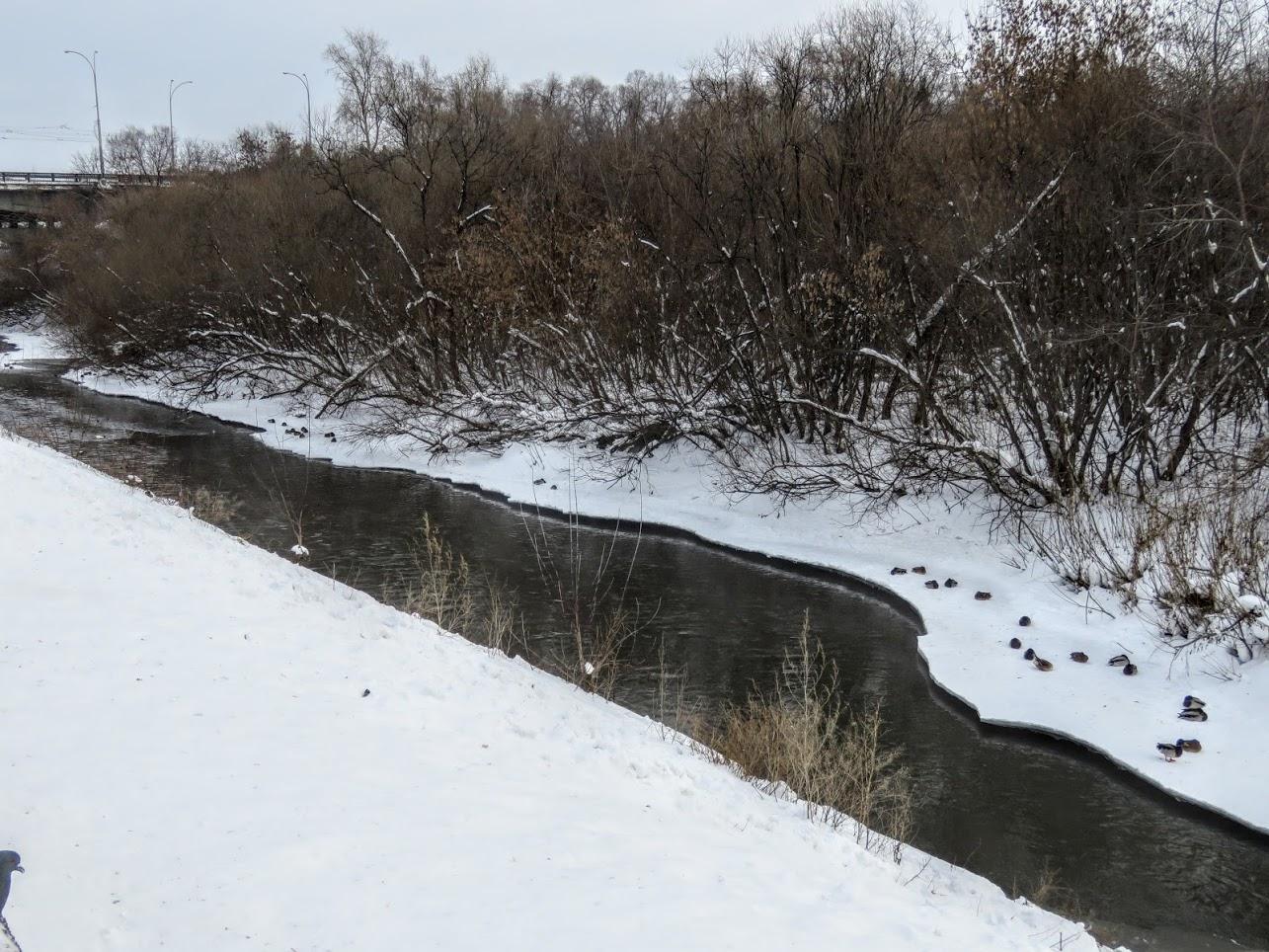 Хохлатые свиристели и Искитимка оттаяла, много воды и о погоде IMG 0772