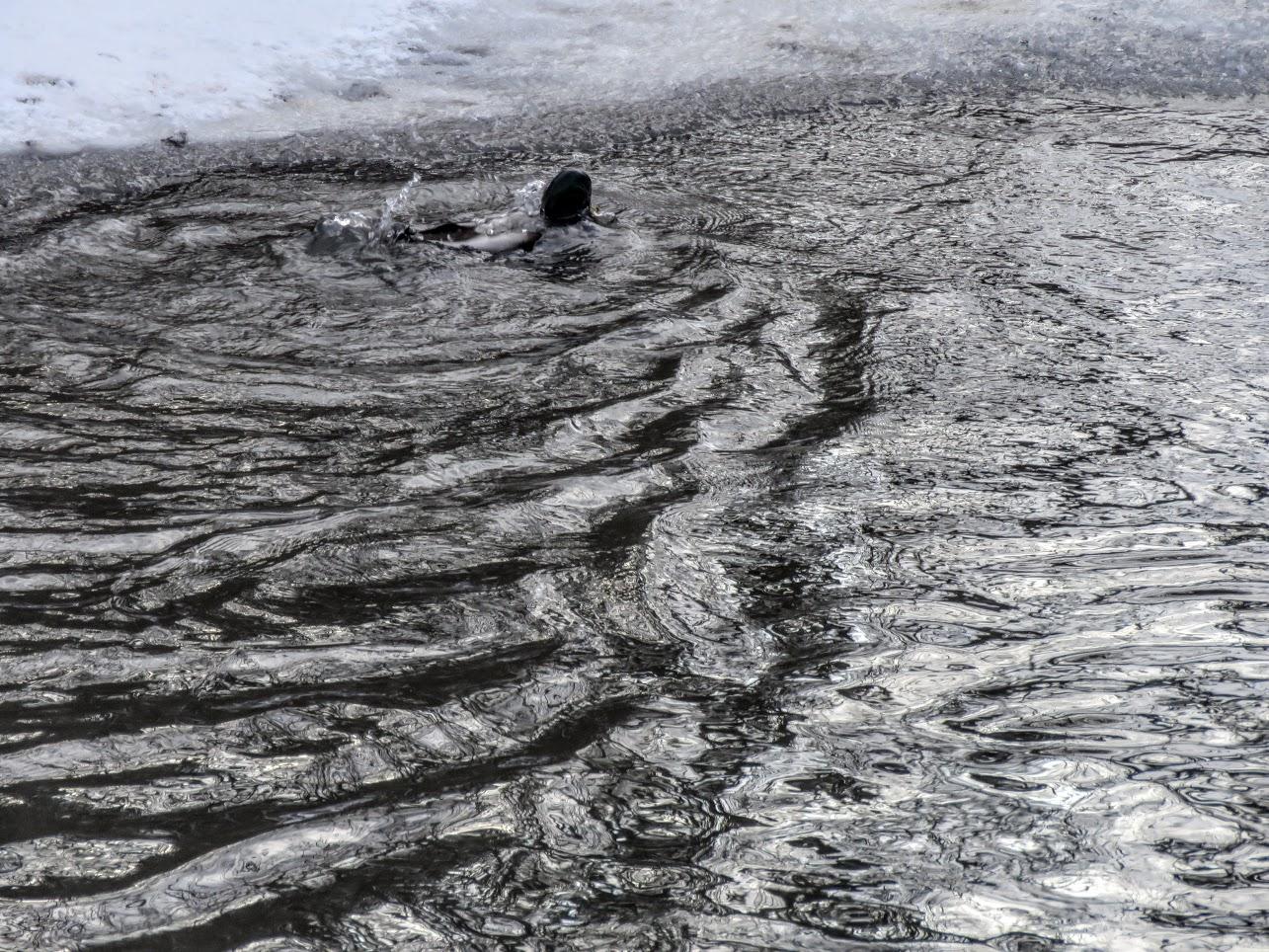 Хохлатые свиристели и Искитимка оттаяла, много воды и о погоде IMG 0776