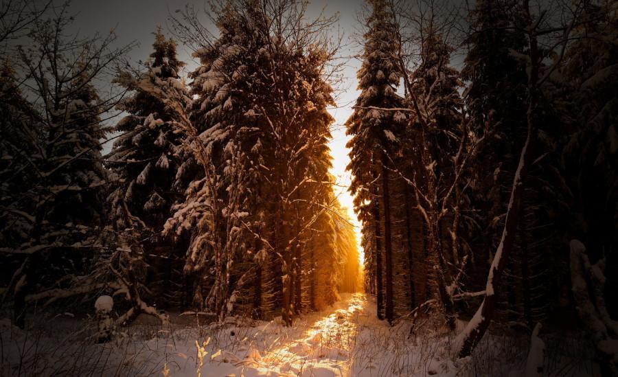 les-utro-sneg-priroda.jpg