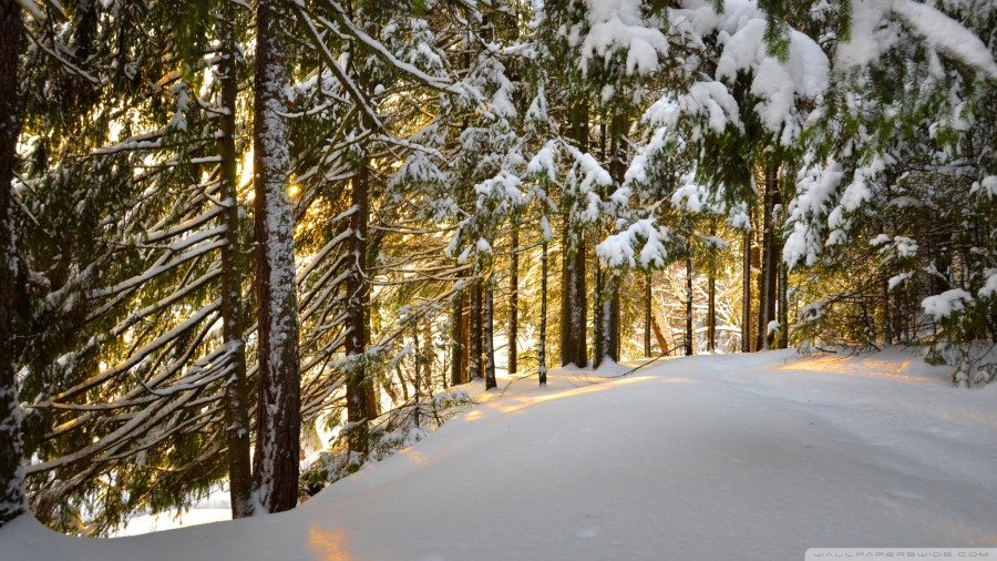 forest_winter_3-wallpaper-2048x1152.jpg